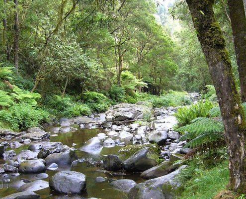 gellibrand-river