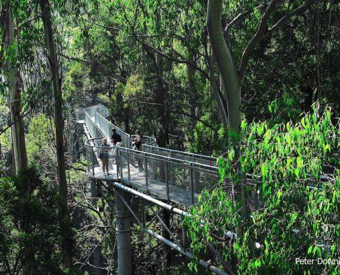 tree-top-walk