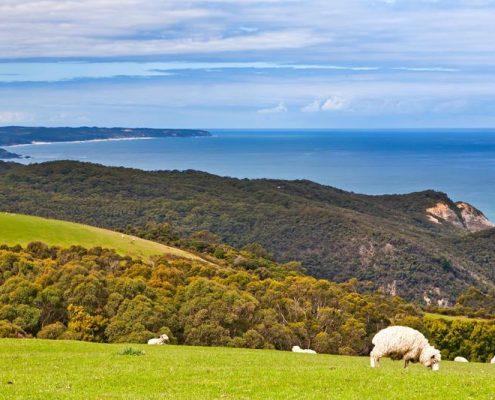 sheep-views
