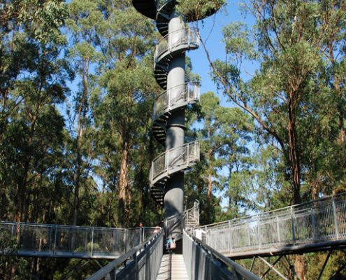 otway-fly-walkway-and-tower