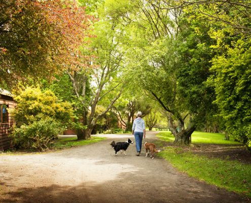 walking-with-dogs-behind-cottages